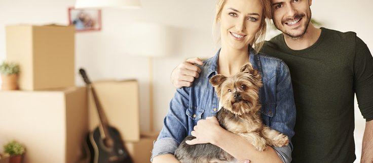 מעבר דירה עם בעלי חיים